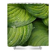 Close-up Of Raindrop On Green Leaves Shower Curtain