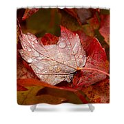 Close-up Of Raindrops On Maple Leaves Shower Curtain