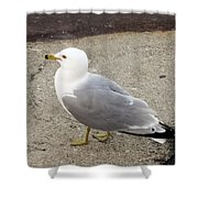 Close-up Of Seagull Shower Curtain
