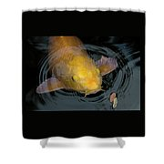 Close Up Of Single Large Yellow Koi Fish With Whiskers Shower Curtain
