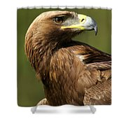 Close-up Of Sunlit Golden Eagle Looking Back Shower Curtain