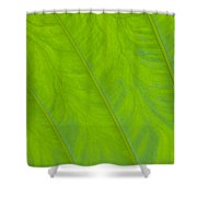 Close Up Of Taro Leaf Shower Curtain