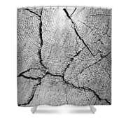 Close Up Of Tree Trunk Shower Curtain