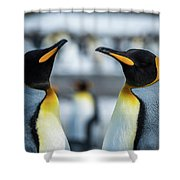 Close-up Of Two King Penguins In Colony Shower Curtain
