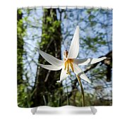 Close-up Of White Trout Lily Shower Curtain