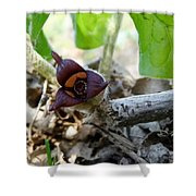 Close-up Of Wild Ginger Shower Curtain