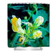 Close Up Of Yellow Wild Flowers Shower Curtain