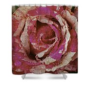 Close Up Pink Red Rose Shower Curtain