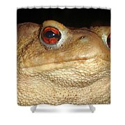 Close Up Portrait Of A Common Toad Shower Curtain