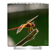 Close Up Red Dragonfly Shower Curtain