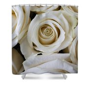 Close Up White Roses Shower Curtain