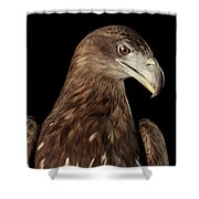 Close-up White-tailed Eagle, Birds Of Prey Isolated On Black Bac Shower Curtain