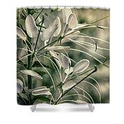 Close Up Wild Flower Shower Curtain