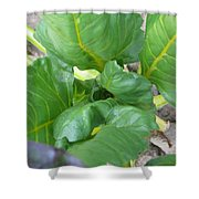 Close Up With Chard Shower Curtain