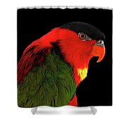 Close-up Yellow-bibbed Lory, Lorius Chlorocercus, Isolated On Black Background Shower Curtain by Sergey Taran
