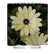 Close View Of A Flower Shower Curtain