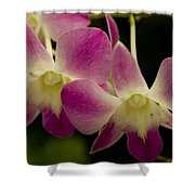Close View Of A Pink Orchid Flowers Shower Curtain