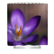 Close View Of A Purple African Violet Shower Curtain