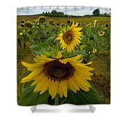 Close View Of A Sunflower At The Edge Shower Curtain