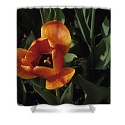 Close View Of A Tulip Shower Curtain