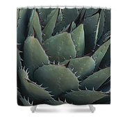 Close View Of An Agave Plant Shower Curtain