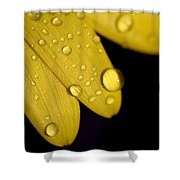 Close View Of Water Drops On The Petals Shower Curtain