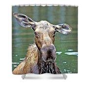 Close Wet Moose Shower Curtain