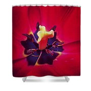Close With Creation Shower Curtain