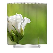 Closed White Flower. Shower Curtain