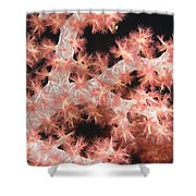 Closeup Detail Of Soft Coral Shower Curtain