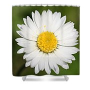 Closeup Of A Beautiful Yellow And White Daisy Flower Shower Curtain