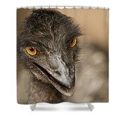 Closeup Of A Captive Emu Shower Curtain