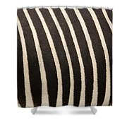 Closeup Of A Grevys Zebras Coat Equus Shower Curtain