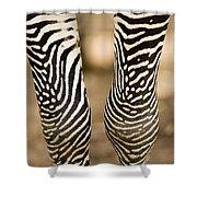 Closeup Of A Grevys Zebras Legs Equus Shower Curtain