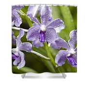 Closeup Of A Hybrid Cultivated Orchid Shower Curtain