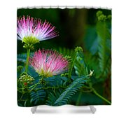 Closeup Of A Mimosa Bloom Shower Curtain