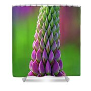 Closeup Of A Pink Lupine Shower Curtain