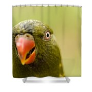 Closeup Of A Scaly-breasted Lorikeet Shower Curtain