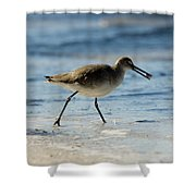 Closeup Of A Willet Catoptrophorus Shower Curtain