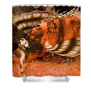Closeup Of An Ocellated Lionfish Shower Curtain