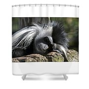 Closeup Of Black And White Angolian Primate Sleeping On Log Raft Shower Curtain