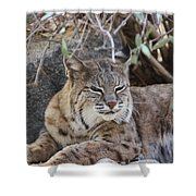 Closeup Of Bobcat Shower Curtain