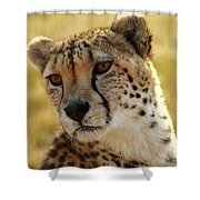 Closeup Of Cheetah Shower Curtain