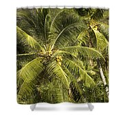 Closeup Of Coconut Palm Trees Shower Curtain