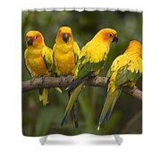Closeup Of Four Captive Sun Parakeets Shower Curtain