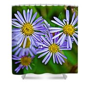Closeup Of Leafy Bract Asters On Iron Creek Trail In Sawtooth National Wilderness Area-idaho  Shower Curtain