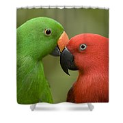 Closeup Of Male And Female Eclectus Shower Curtain