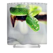 Closeup Of Poisonous Green Snake With Yellow Eyes - Vogels Pit Viper  Shower Curtain