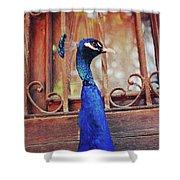 Closeup Portrait Of A Peacock Peafowl Shower Curtain