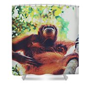 Closeup Portrait Of A Wild Sumatran Adult Female Orangutan Climbing Up The Tree And Holding A Baby Shower Curtain
